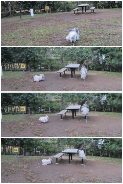 2011-11-01-01.jpg