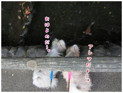 2011-11-09-04.jpg
