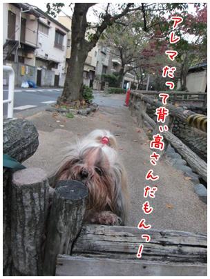 2011-11-09-07.jpg