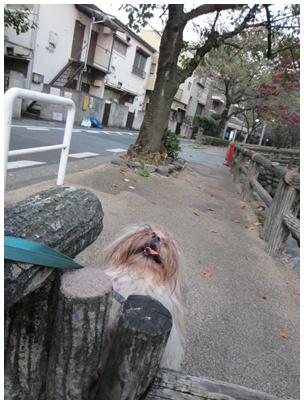 2011-11-09-08.jpg