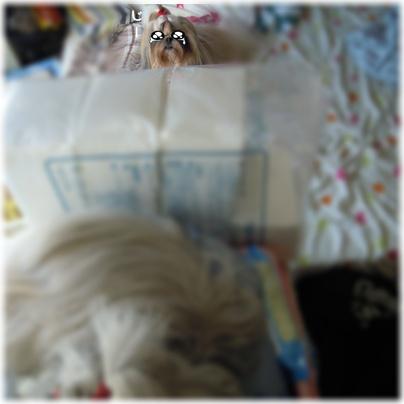 2011-11-14-06.jpg