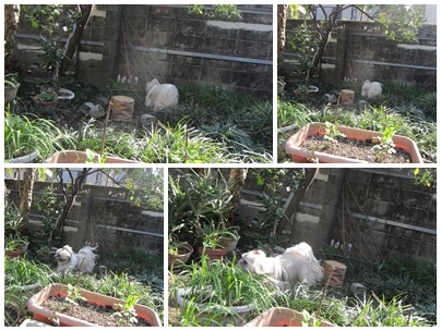 2011-11-25-01.jpg