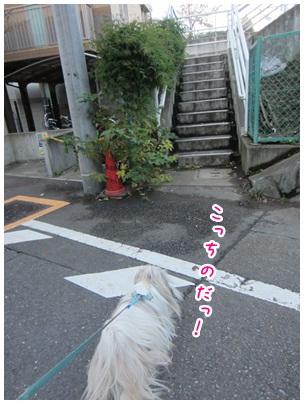 2011-12-04-03.jpg