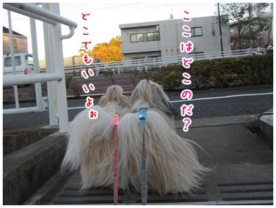 2011-12-04-06.jpg