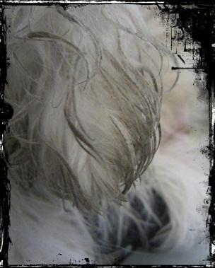 2011-12-16-08.jpg