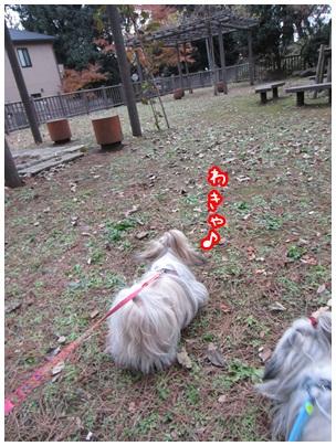 2011-12-23-04.jpg