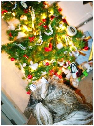2011-12-24-01.jpg