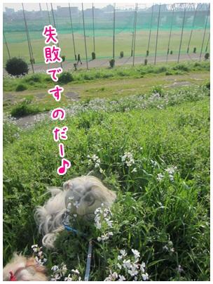 2012-04-27-11.jpg
