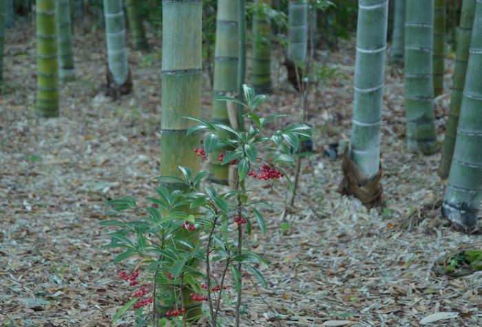 朝の竹林-3