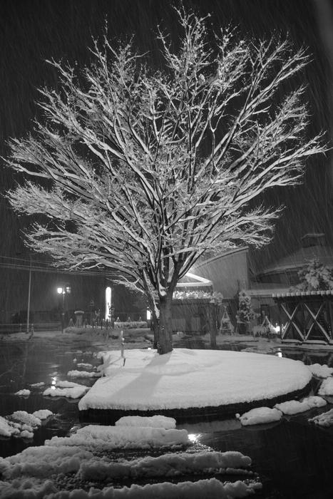 木に降る雪-1