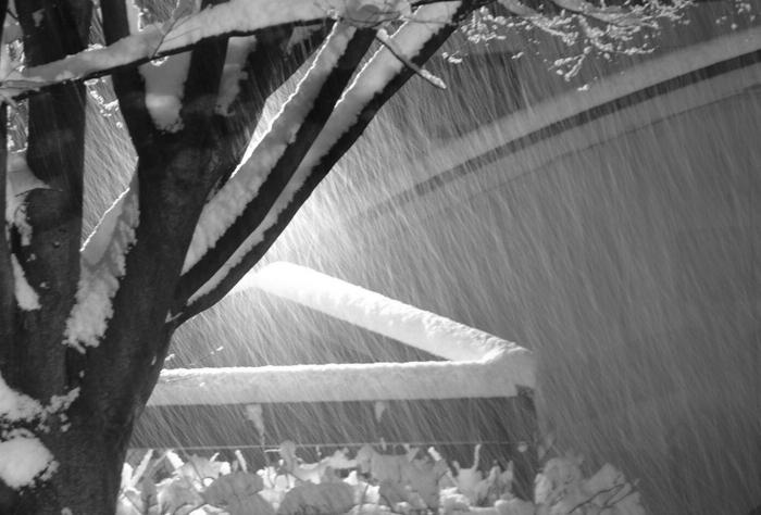 木に降る雪-3
