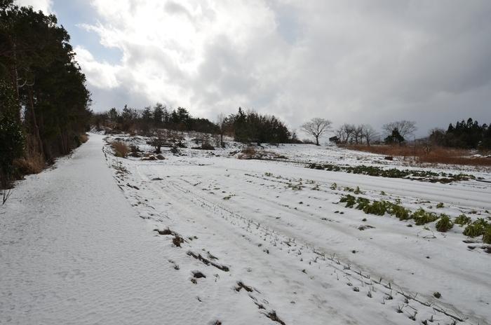 雪景色-2