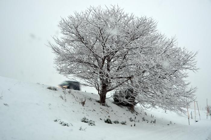 雪の朝-1