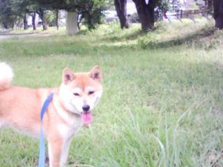 8月の公園