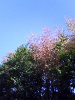 秋晴れ1103