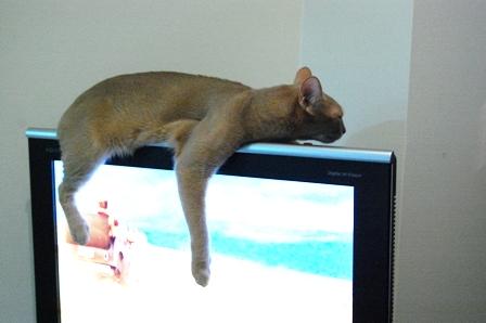 tv (2)