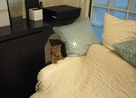 猫の巣05