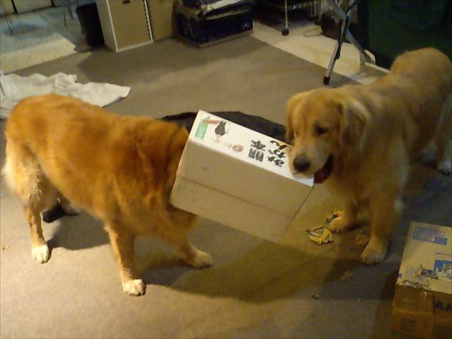 箱で遊ぶアッシュとアトム