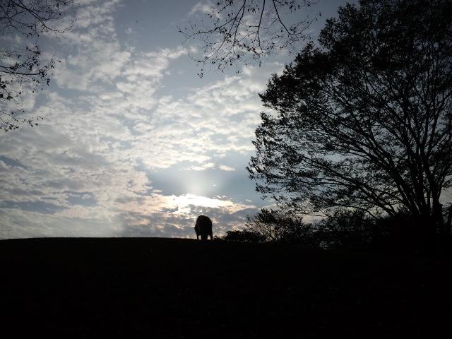 秋朝のアッシュ