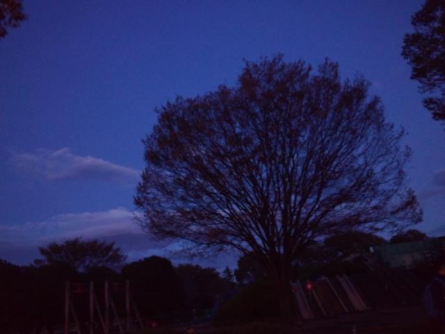 夜の公園の木