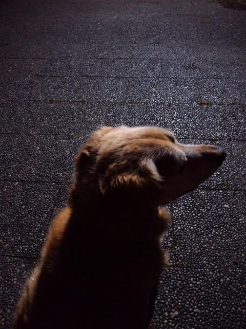夜のアッシュ