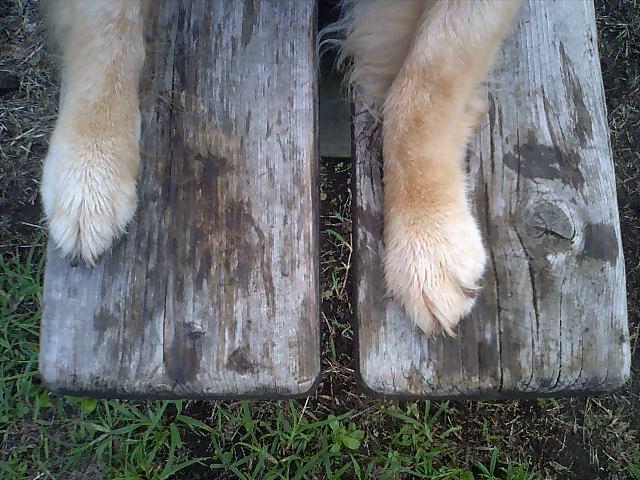 アッシュの足