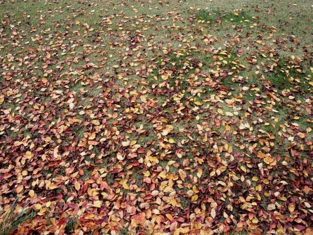 落ち葉のグラデーションC
