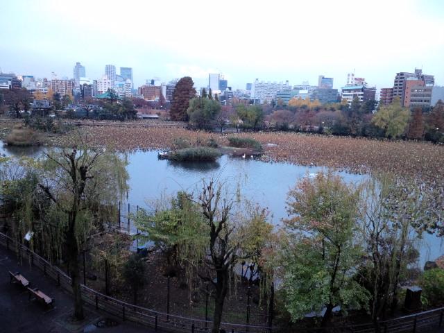 忍ばすの池