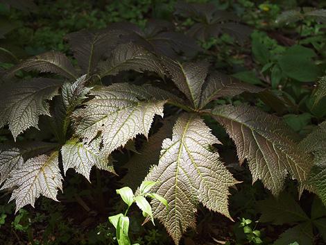 yagurumasou-1002-470.jpg