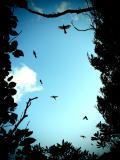 birds-disturbed