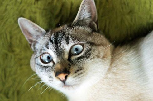 今年の4月頃のアッシュ。若干色を明るめに補正したら眼の色にブルーがありました。