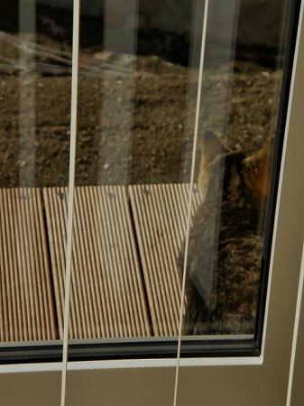 日向ぼっこする隣の猫