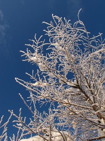 青空に映える凍った木々