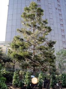 2010-11-26g.jpg
