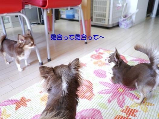 3P1020832yokiuyarudesyiyon.jpg