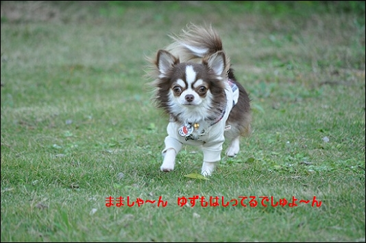 DSC_0135yuzumohasirudesyuyontetateyama.jpg
