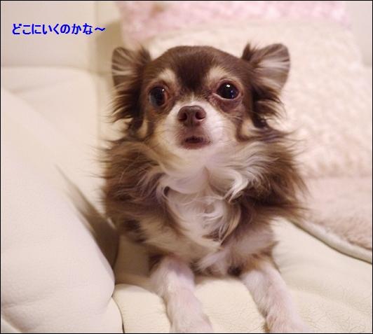P1030079tanosimidayo.jpg