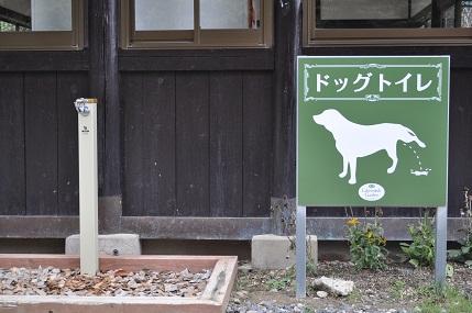 doggutoire.jpg