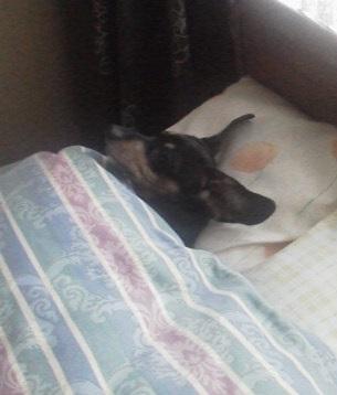 140104ピンパ枕で寝る姿