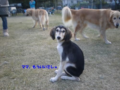 PB100111_convert_20121111224354.jpg