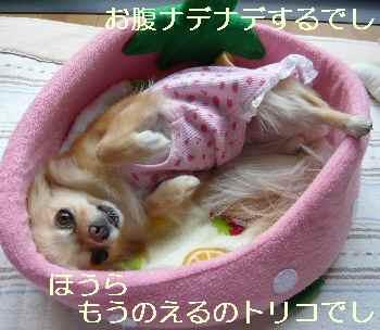 blog2010060102.jpg
