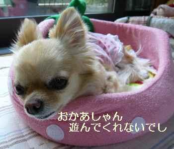 blog2010060104.jpg