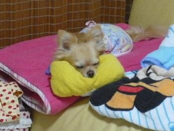 blog2010060403.jpg