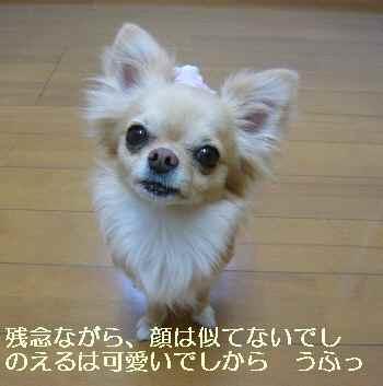 blog2010060605.jpg
