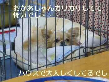 blog2010060801.jpg
