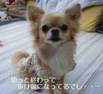 blog20100611002.jpg