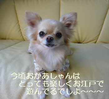 blog20100612.jpg