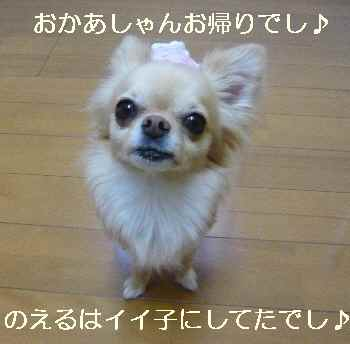 blog2010061304.jpg