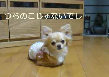 blog2010062103.jpg
