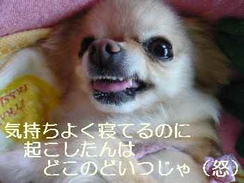 blog2010062204.jpg